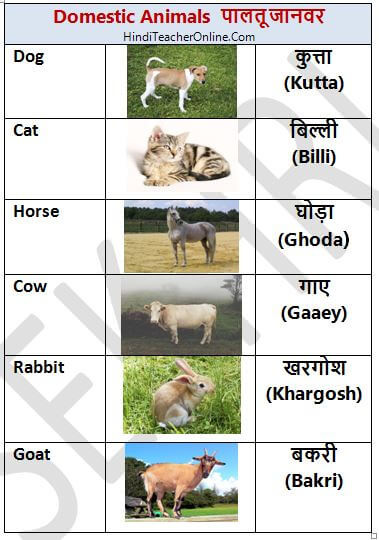 hindi-charts-for-kids-domestic-animals