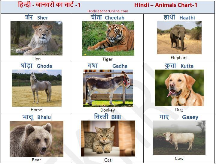 hind-charts-for-kids-animals-1